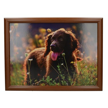 Creative Tops Spring Field Spaniel Laptray